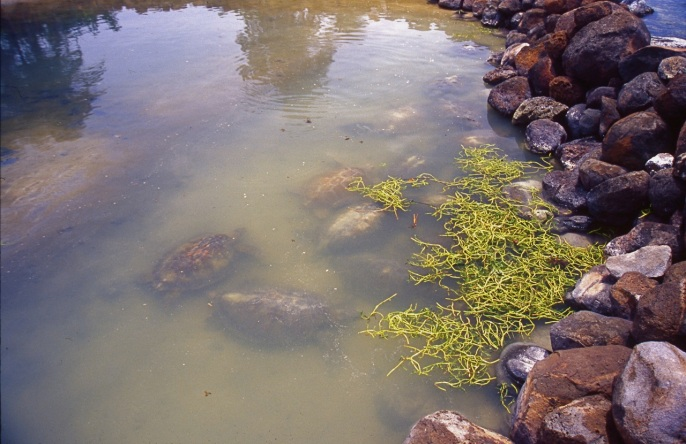 A turtle kraal (or storage pond) in Corn Island.