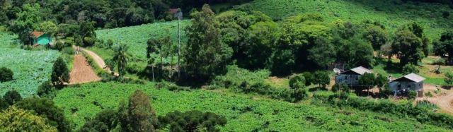 Grape vines covering hills near Bento Gonçalves.